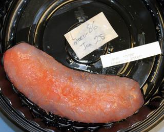 To NMNH Extant Collection (IZ 1151587 specimen)