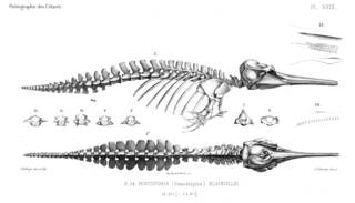 To NMNH Extant Collection (MMP STR 10164 Pontoporia blainvillei skeleton)