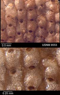 To NMNH Paleobiology Collection (IRN 3105682)