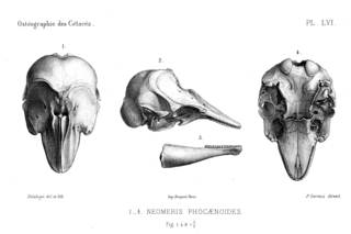To NMNH Extant Collection (MMP STR 14192 Neophocaena phocaenoides skull)