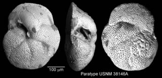 To NMNH Paleobiology Collection (IRN 3143456)