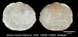 To NMNH Extant Collection (IZMOL173002 Holotype Valve)