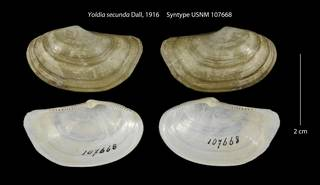 To NMNH Extant Collection (Yoldia secunda Syntype USNM 107668)