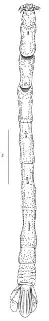 To NMNH Extant Collection (IZ USNM 185000 Malacanthura antarctica)