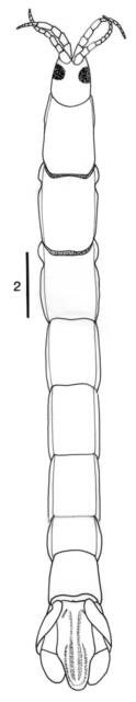 To NMNH Extant Collection (IZ Malacanthura arabica USNM 253268)