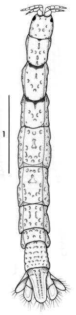 To NMNH Extant Collection (IZ Natalanthura fijiensis USNM 172275)