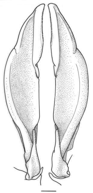 To NMNH Extant Collection (IZ Benthonectes filipes)