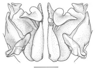 To NMNH Extant Collection (IZ Gennadas parvus)