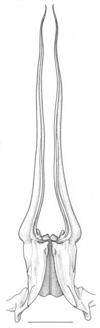 To NMNH Extant Collection (IZ Macropetasma africana)