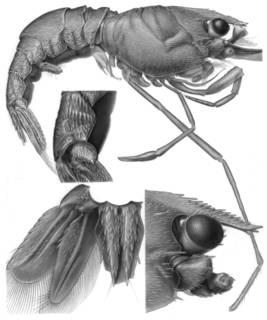 To NMNH Extant Collection (IZ Odontozona spinosissima SAM A16811)