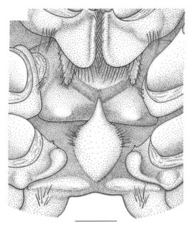 To NMNH Extant Collection (IZ Hymenopenaeus debilis)