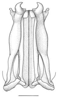 To NMNH Extant Collection (IZ Sicyonia carinata)