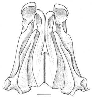 To NMNH Extant Collection (IZ Solenocera membranacea)