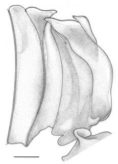 To NMNH Extant Collection (IZ Pleoticus robustus)
