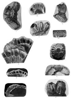 To NMNH Extant Collection (Balanus balanus USNM 48195, 51760, 51426, 48017, 51567, 48016, 12092, 48018)