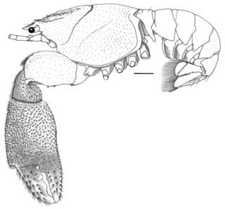 To NMNH Extant Collection (IZ Paraxiopsis granulimana USNM 243387)