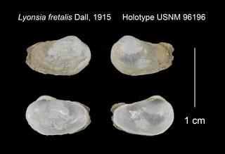 To NMNH Extant Collection (Lyonsia fretalis Holotype USNM 96196)