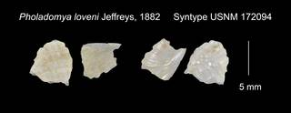 To NMNH Extant Collection (Pholadomya loveni Syntype USNM 172094)