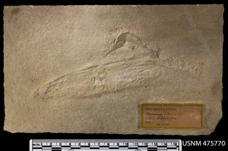 To NMNH Paleobiology Collection (USNM PAL 475770)