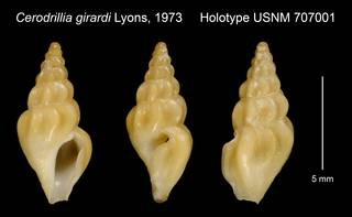 To NMNH Extant Collection (Cerodrillia girardi Lyons, 1973 Holotype USNM 707001)