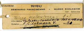 To NMNH Extant Collection (USNM 444341 Tringa)
