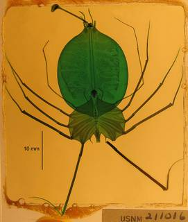 To NMNH Extant Collection (USNM 211016 Scyllarides squamous)