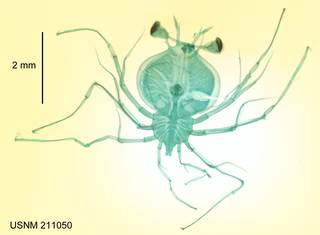 To NMNH Extant Collection (USNM 211050 Scyllarus)