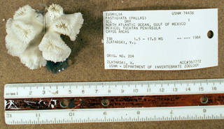 To NMNH Extant Collection (IZ COE USNM 74436 whole specimen top view)