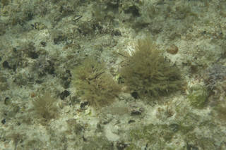 To NMNH Extant Collection (Eupogodon 68166 (2).jpg)