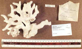 To NMNH Extant Collection (IZ COE USNM 1231295 whole specimen side view)