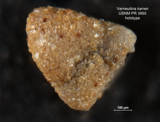 To NMNH Paleobiology Collection (Verneuilina karreri PR3955 holo 2)