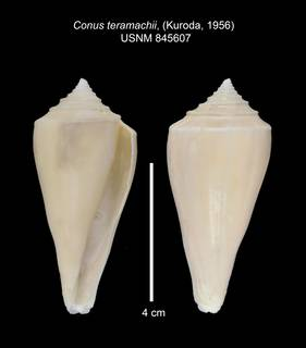 To NMNH Extant Collection (IZ MOL 845607 Shell 1 Plate)