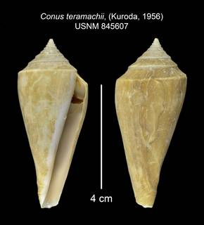 To NMNH Extant Collection (IZ MOL 845607 Shell 2 Plate)