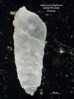 To NMNH Paleobiology Collection (Vaginulina longiforma PR4036 holo 1)