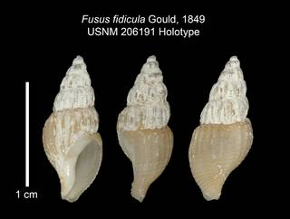 To NMNH Extant Collection (IZ MOL 206191 Holotype Shell Plate)