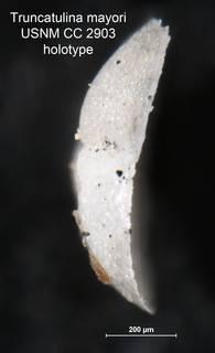 To NMNH Paleobiology Collection (Truncatulina mayori CC 2903 holo 2)