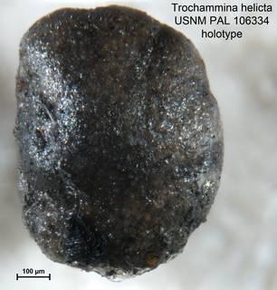To NMNH Paleobiology Collection (Trochammina helicta PAL106334 holo 2)