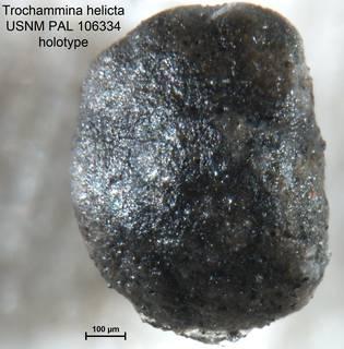 To NMNH Paleobiology Collection (Trochammina helicta PAL106334 holo 1)