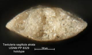To NMNH Paleobiology Collection (Textularia sagittula atrata PP8329 holo 2)