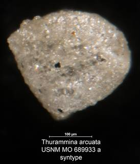 To NMNH Paleobiology Collection (Thurammina arcuata USNM MO 689933a syntype)