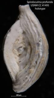 To NMNH Paleobiology Collection (Spiroloculina profunda USNM CC 41495 holotype)