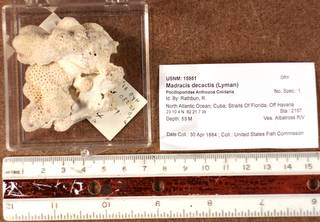 To NMNH Extant Collection (IZ USNM 15951 topview)