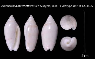 To NMNH Extant Collection (IZ 1231405 Holotype Shell plate)