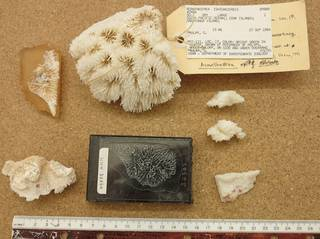 To NMNH Extant Collection (IZ USNM 89888 topview)