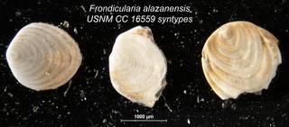 To NMNH Paleobiology Collection (Frondicularia alazanensis USNM CC 16559 syntypes bottom row)