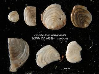 To NMNH Paleobiology Collection (Frondicularia alazanensis USNM CC 16559 syntypes top row)