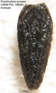 To NMNH Paleobiology Collection (Frondicularia acmaea USNM PAL 106394 holotype)