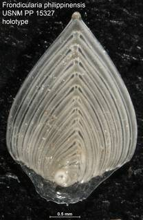 To NMNH Paleobiology Collection (Frondicularia philippinensis USNM PP 15327 holotype)