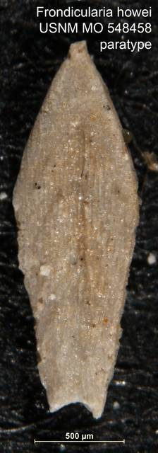 To NMNH Paleobiology Collection (Frondicularia howei USNM MO 548458 paratype 1)