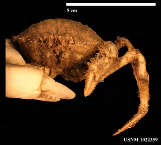 To NMNH Extant Collection (IZ 1022359 Face View)